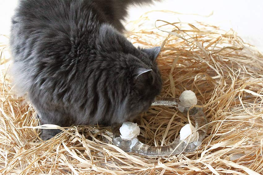 kätts-Kräuterkugeln mit Katzenminze, Baldrian, Matatabi (Silver Vine) und Katzengamander