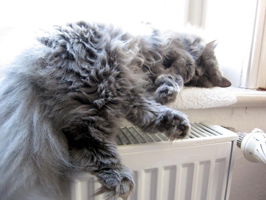kätts Chefkatze Felina beim sich Allein-zuhaus-Langweilen