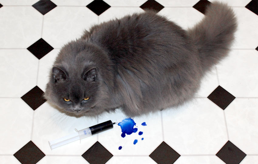 kätts Chefkatze Felina und ihr blaues Perserblut