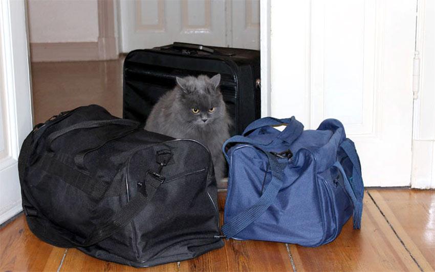 Reisetaschen - jede Katze weiß, dass diese nichts Gutes verheißen