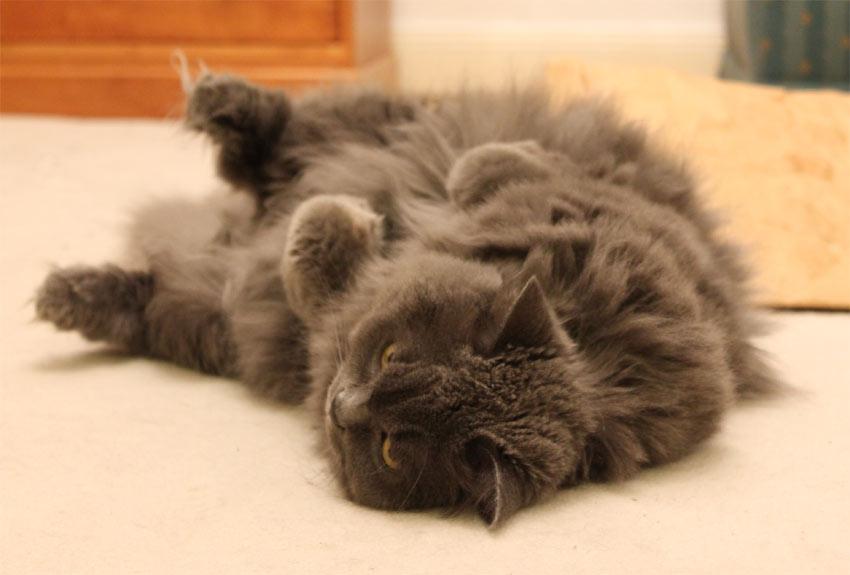 eine katze als geschenk 9 dinge die sie dar ber wissen sollten das k tts katzenversteher blog. Black Bedroom Furniture Sets. Home Design Ideas