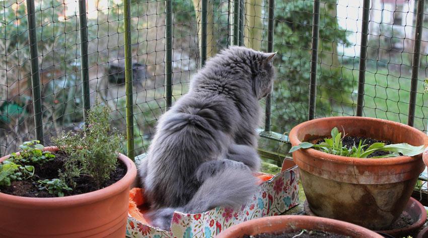 kätts Chefkatze Felina genießt den ersten warmen Frühlingstag des Jahres 2015