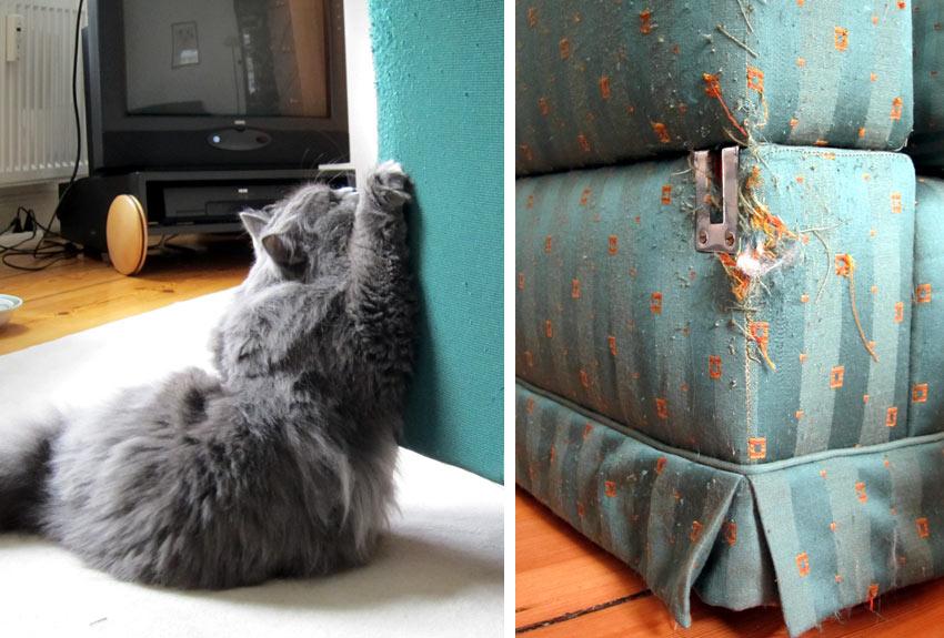 eine katze als geschenk 9 dinge die sie dar ber wissen. Black Bedroom Furniture Sets. Home Design Ideas