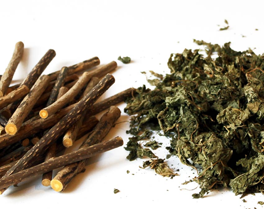 Matatabi-Sticks und Matatabi-Blätter (Silver Vine)