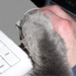 Felina hat die Pfote auf der Maus