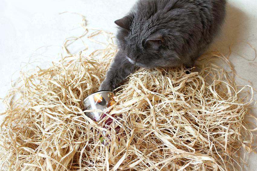 kätts-Chefkatze Felina auf Ostereiersuche