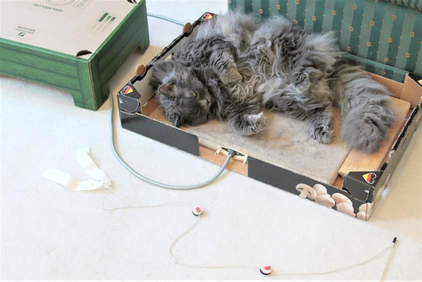 kätts-Chefkatze liegt plattgespielt neben ihrer kätts-Katzenangel