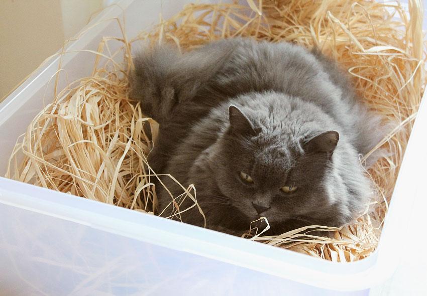 kätts Chefkatze Felina nimmt ein Bad in der Kiste mit dem Raffiabast