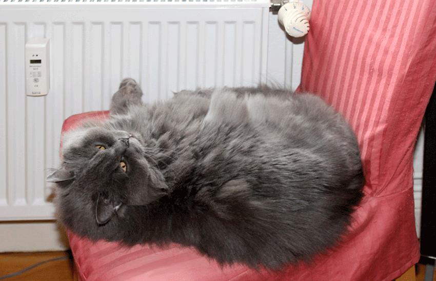 kätts Chefkatze Felina verschläft den Frühling