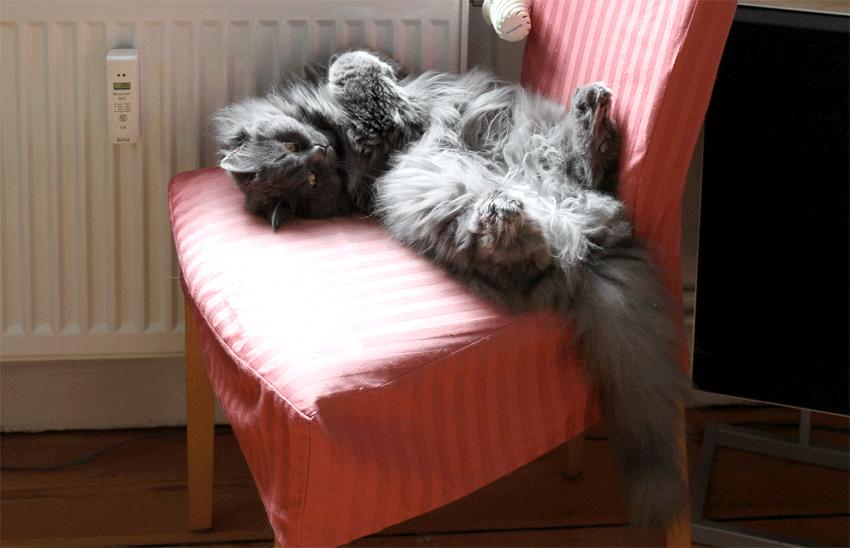 kätts Cehfkatze Felina an der abgestellten Heizung